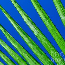 Kaye Menner - Diagonal Nature