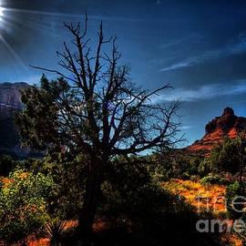 Robert McCubbin - Diamondback Sunrise
