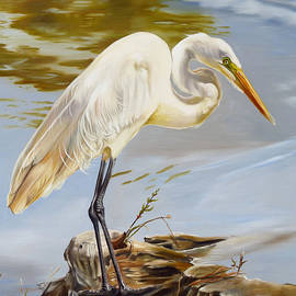 Phyllis Beiser - Diamondhead Pond Great Egret