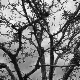 Eric Forster - Digital Chalk Of Winter Tree
