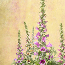 Julie Woodhouse - Digitalis purpurea