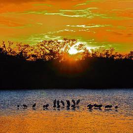 Rosalie Scanlon - Ding Darling Surreal Sunset