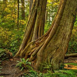 Fred Hunt - Dino Tree