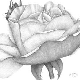 Patricia Hiltz - Distant Drum Rose Bloom