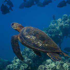 Richard Shelton - Dive Maui