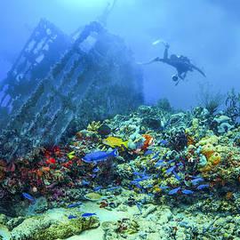 Debra and Dave Vanderlaan - Diver at the Wreck