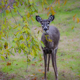 Bill Cannon - Doe a Deer