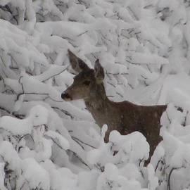 Steven Parker - Doe in the Snow