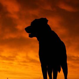 E B Schmidt - Dog at Sunset