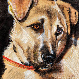 Daliana Pacuraru - Dog portrait drawing