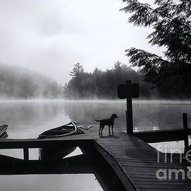 Luther  Fine Art - Dog - Waiting For Her - Luther Fine Art