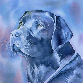 Thomas Habermann - Dogs eyes 4