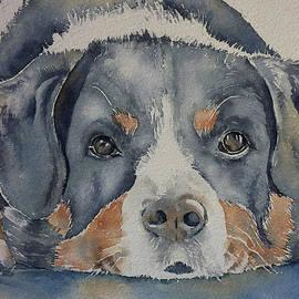 Thomas Habermann - Dogs Eyes 7