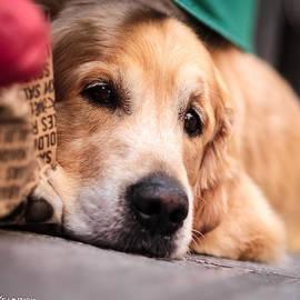 Stwayne Keubrick - Dog