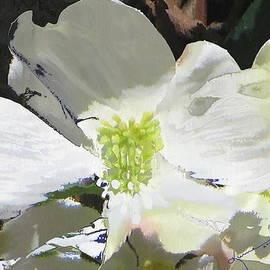 Kume Bryant - Dogwood Blossom