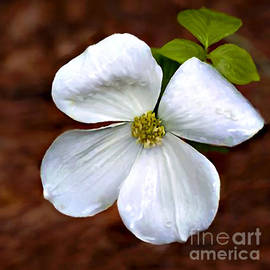 Bob and Nadine Johnston - Dogwood Blossom Yosemite