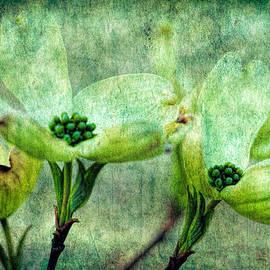 Geraldine Scull   - Dogwood Blossoms