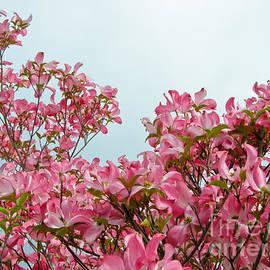 Nick  Boren - Dogwood Blossoms