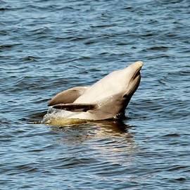 Cynthia Guinn - Dolphin Playing