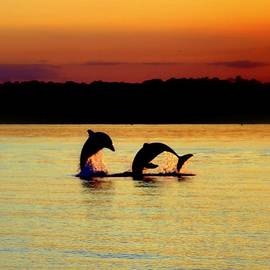 Karen Wiles - Dolphin Serenade