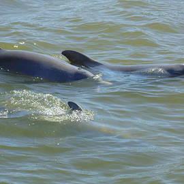 Dotti Hannum - Dolphins