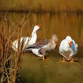 Linda Muir - Domestic Geese