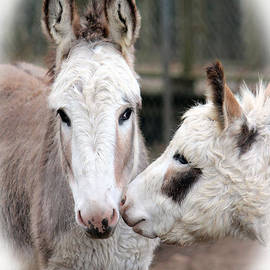 Cynthia Guinn - Donkey Love
