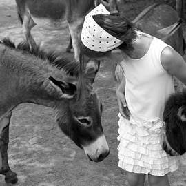 Brooke T Ryan - Donkey Whisperer