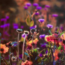 Douglas MooreZart - Donovans Garden