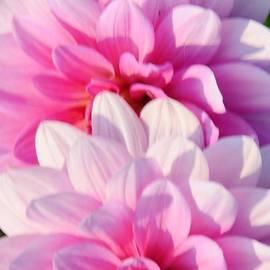 Kathleen Struckle - Double Pink