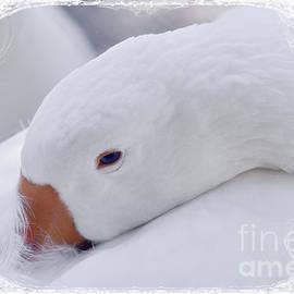 Elaine Manley - Downy Soft Mother Goose