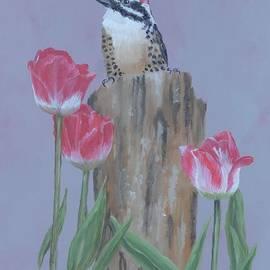 Bob Williams - Downy Woodpecker