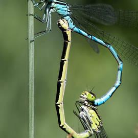 Leif Sohlman - Dragon Fly