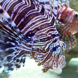 Sandi OReilly - Dragonfish In Tandem