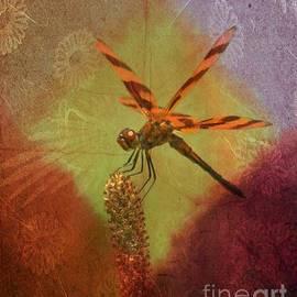 Maria Urso  - Dragonfly Art 14-1
