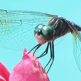 Valia Bradshaw - Dragonfly Beauty