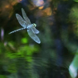 Belinda Greb - Dragonfly No 1