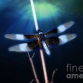 Peggy  Franz - Dragonfly
