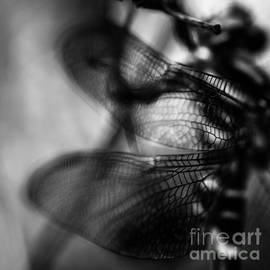 Victoria Whitehead - Dragonfly