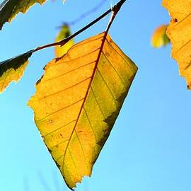 Karen  Majkrzak - Dramatic Leaves