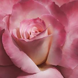 Jennie Marie Schell - Dramatic Mauve Cream Rose Flower