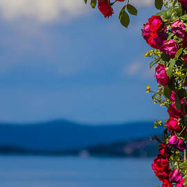 Sotiris Filippou - Dream full of Roses