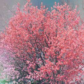 Brenda  Spittle - Dream In Color