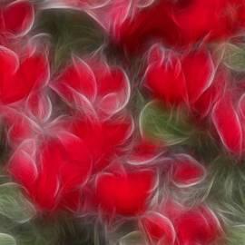 Timothy Bischoff - Dream Red 5232