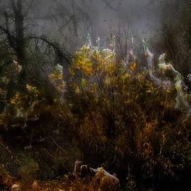 Larry Goss - Dream Weavers