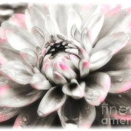 Sharon Woerner - Dreaming of Dahlia