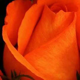 Bruce Bley - Dreams of Orange
