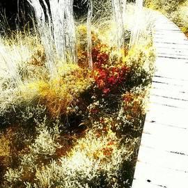 Tim Richards - Dreamtime Wood Track