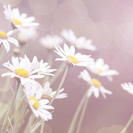 Linda Lees - Dreamy Daisies