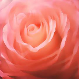Maggie Vlazny - Dreamy Pink Rose